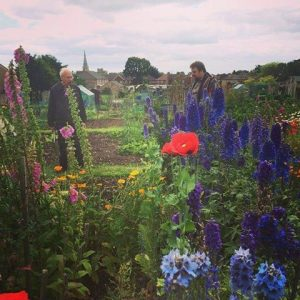 Bik with his Dad on the allotment of glory - 40 years organic veg growing (with lovely flowers as companion plants!)